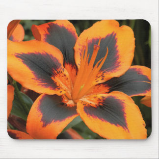 Orange Asiatic Lily Floral Mouse Pad