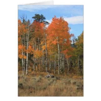 Orange Autumn Aspen All Occasion Greeting Card