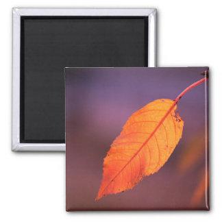 Orange autumn leaf magnet