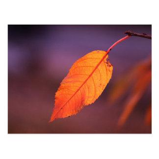 Orange autumn leaf postcard