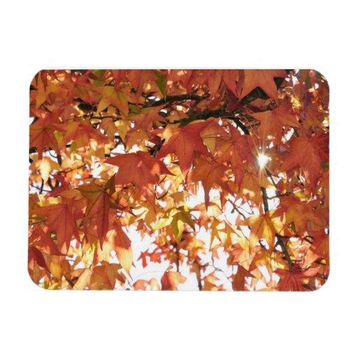 Orange autumn leafs with hard sun rectangle magnets