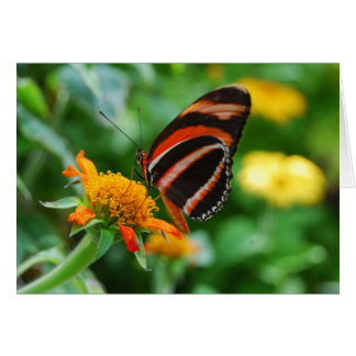 Orange Banded Butterfly Card