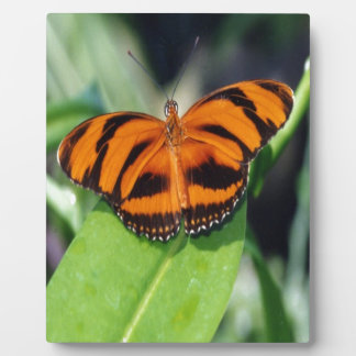 Orange Banded Butterfly .jpg Plaques