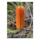 Orange Banksia Greeting Card