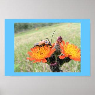 Orange Beetle on Fire Weed Poster