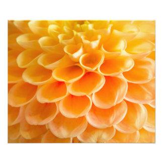 Orange Bells Photo Print