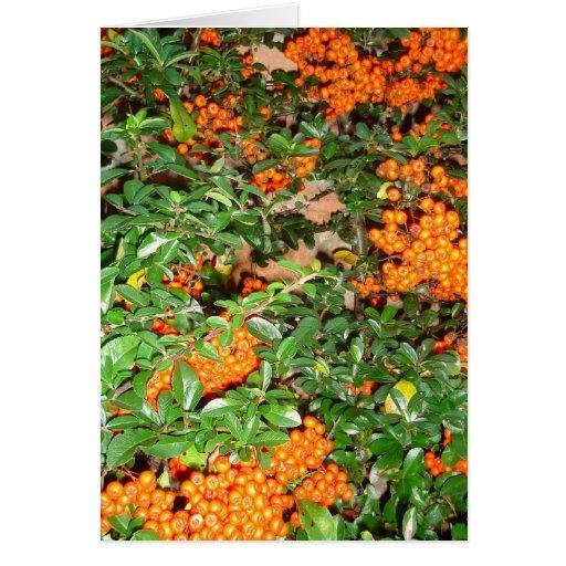 Orange Berries Cards
