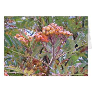 Orange Berries Card
