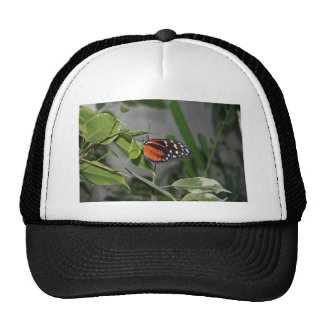 Orange Black and White Spotted Butterfly. Trucker Hats