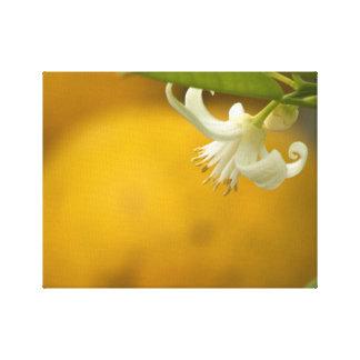 Orange Blossom on Orange Canvas Print