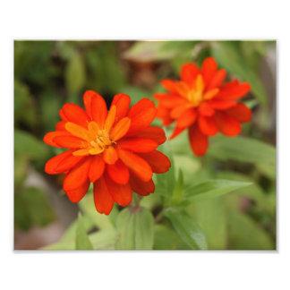 Orange Burst ! 10x8 Photograph
