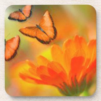 Orange Butterflies Beverage Coasters
