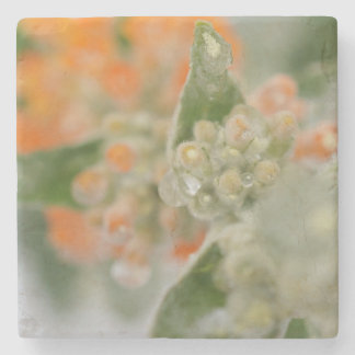 Orange Butterfly Bush Stone Coaster