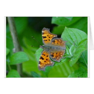 Orange butterfly card