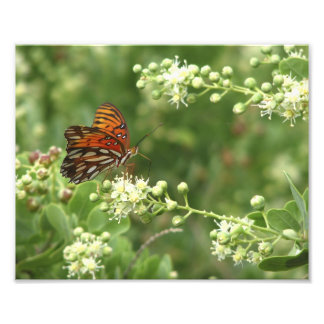 Orange Butterfly Photo Print