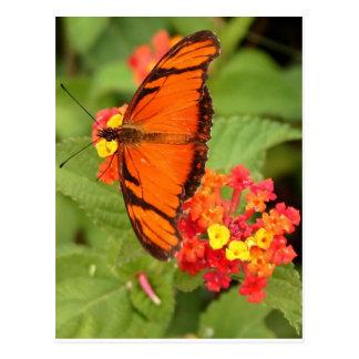 orange butterfly postcard