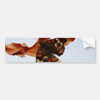 orange Butterfly  with blue spots Bumper Sticker
