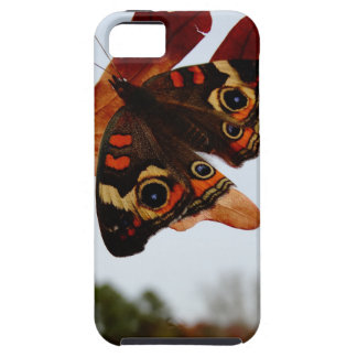 orange Butterfly  with blue spots iPhone 5 Covers