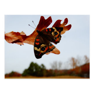 orange Butterfly  with blue spots Postcard