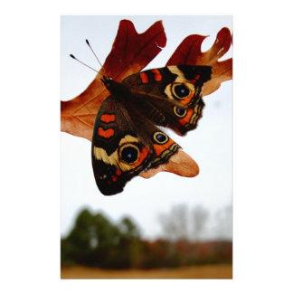 orange Butterfly  with blue spots Stationery