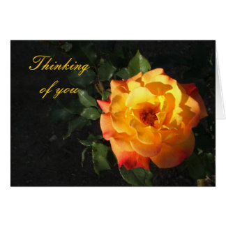 Orange Cali rose card