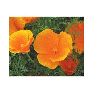 Orange California Flowers Stretched Canvas Print