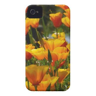 Orange California Poppies_3.1 Case-Mate iPhone 4 Cases