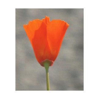 Orange California Poppy Gallery Wrapped Canvas