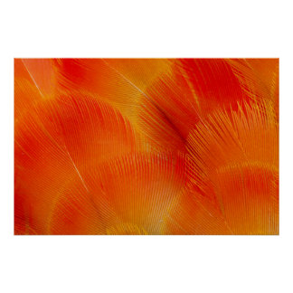 Orange Camelot Macaw Feather Abstract Poster