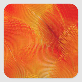 Orange Camelot Macaw Feather Abstract Square Sticker