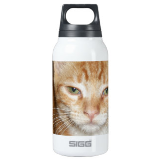 Orange Cat 0.3L Insulated SIGG Thermos Water Bottle