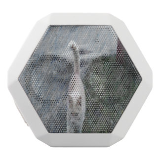 Orange cat white boombot rex bluetooth speaker