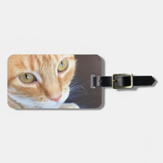 Orange cat closeup luggage tag