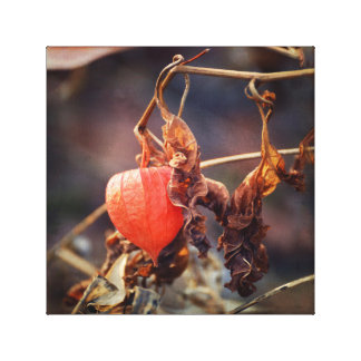 Orange Chinese Lantern Plant in Fall Botanical Canvas Print