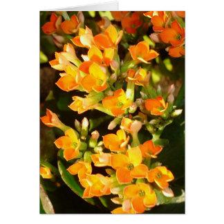 Orange clusters card