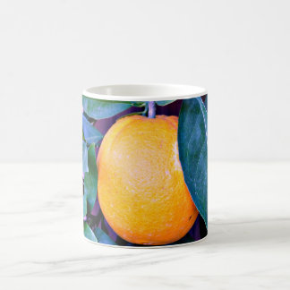 Orange Coffee Cup/Mug Coffee Mug