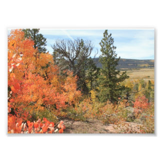 Orange Colorado Aspen Photo