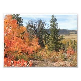 Orange Colorado Aspen Art Photo