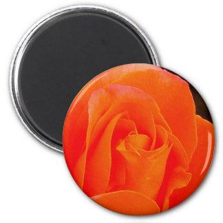 Orange Colored Rose Magnet