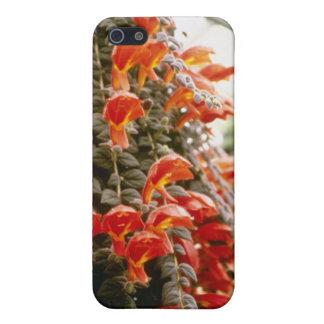Orange Columnea Gloriosa Goldfish Plant flowers Case For The iPhone 5