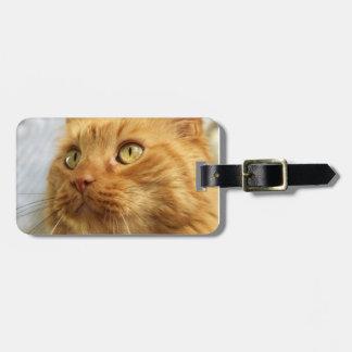 Orange Coon Cat Luggage Luggage Tag