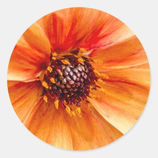 Orange Cosmos Round Sticker