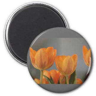 Orange Cream Tulips 6 Cm Round Magnet