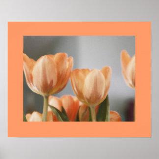 Orange cream tulips poster