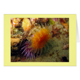 Orange Cup Coral Card