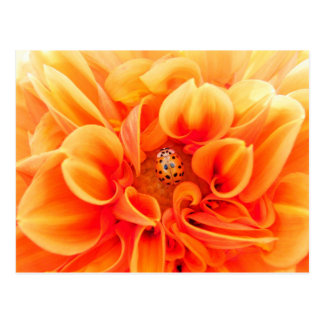 Orange Dahlia and Ladybug Postcard