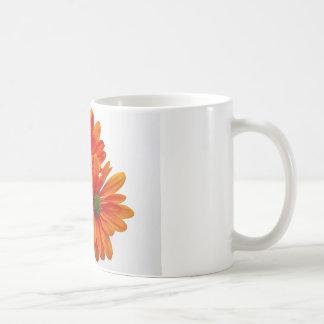 Orange Daisies Mugs