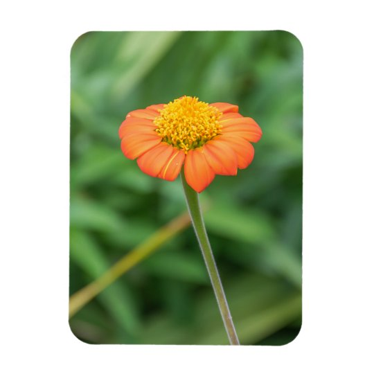 Orange daisy fridge magnet