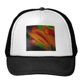 Orange Daisy Trucker Hat