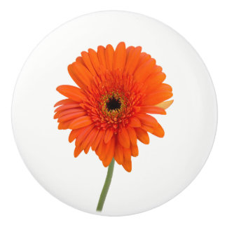 Orange Daisy Knob
